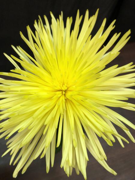 秋の草花を代表する名花!_a0300110_10163571.jpg