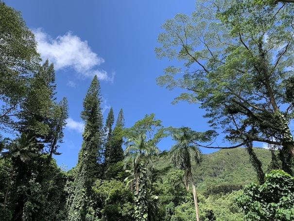 緑豊かなマノアの滝でリフレッシュ!!_c0187025_06180055.jpg