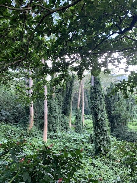 緑豊かなマノアの滝でリフレッシュ!!_c0187025_06192910.jpg
