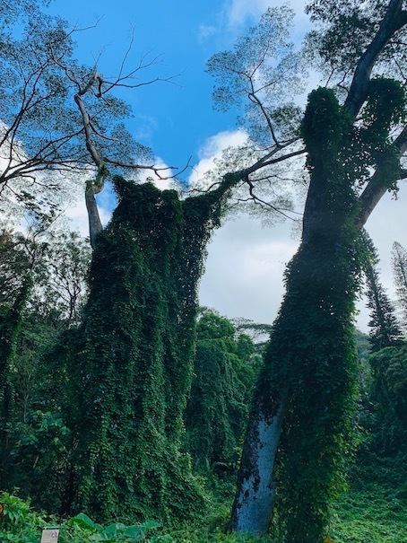 緑豊かなマノアの滝でリフレッシュ!!_c0187025_06194274.jpg