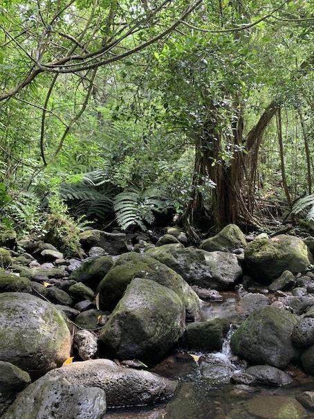 緑豊かなマノアの滝でリフレッシュ!!_c0187025_06201837.jpg