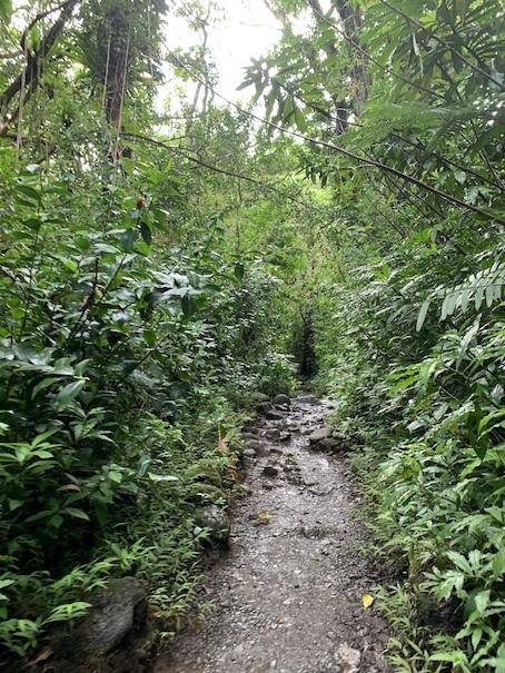 緑豊かなマノアの滝でリフレッシュ!!_c0187025_06210322.jpg