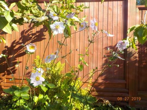フェンスの塗装_a0173527_10043378.jpg