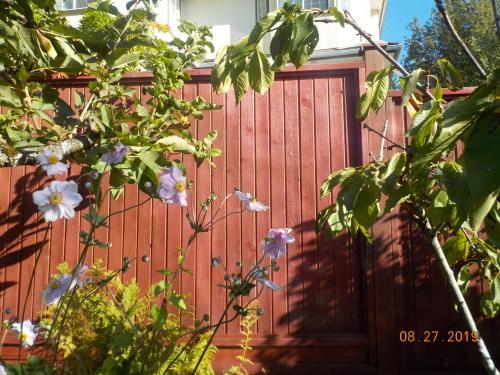 フェンスの塗装_a0173527_10060554.jpg