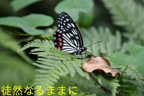 外来種 アカボシゴマダラ_d0285540_07412418.jpg