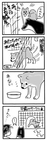 2004年11月5日のシバツレ漫画_b0057675_22265284.jpg
