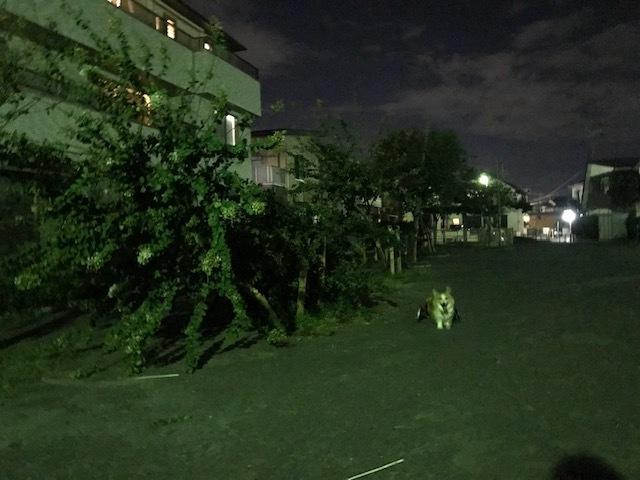 台風一過、蒸し暑い夜のお散歩_f0242002_10511231.jpg