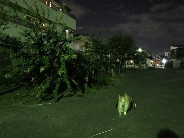 台風一過、蒸し暑い夜のお散歩_f0242002_10511679.jpg