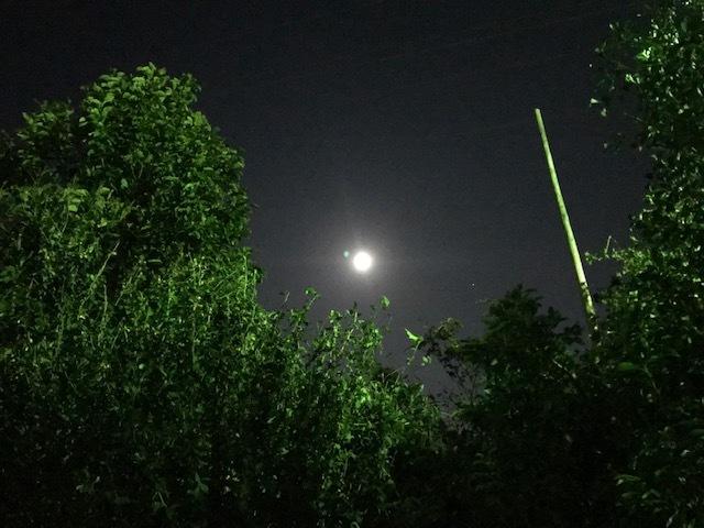台風一過、蒸し暑い夜のお散歩_f0242002_10512122.jpg