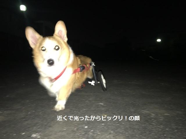 台風一過、蒸し暑い夜のお散歩_f0242002_10533516.jpg