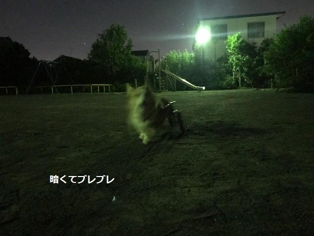 台風一過、蒸し暑い夜のお散歩_f0242002_11292968.jpg