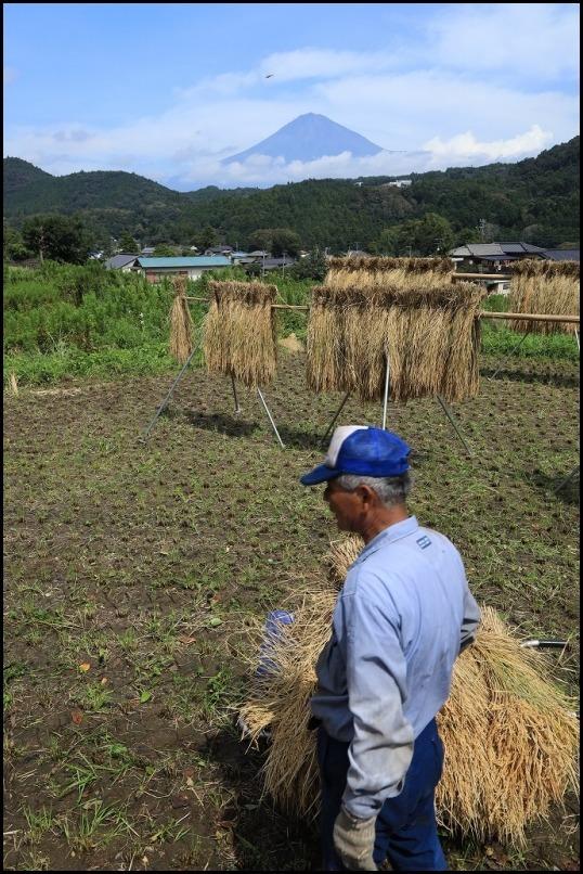 稲刈りの季節です_a0188405_14502285.jpg