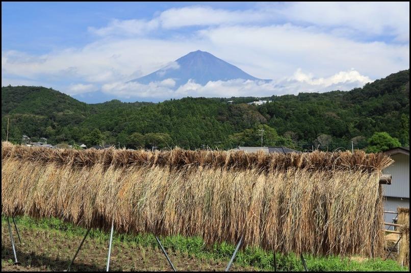 稲刈りの季節です_a0188405_14510153.jpg