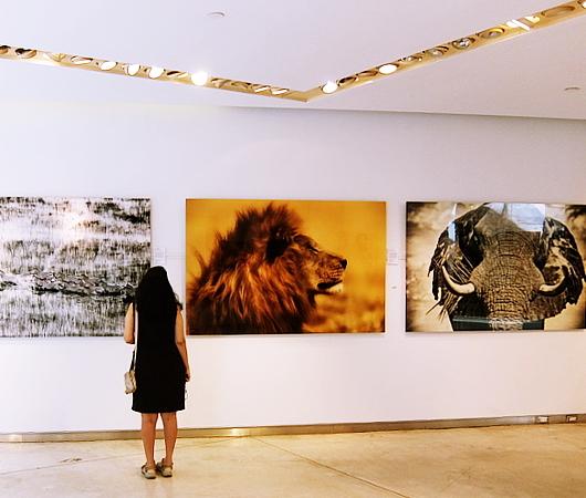 NYのSOHOにあるナショナル・ジオグラフィックのギャラリー National Geographic Fine Art Gallery_b0007805_10475067.jpg