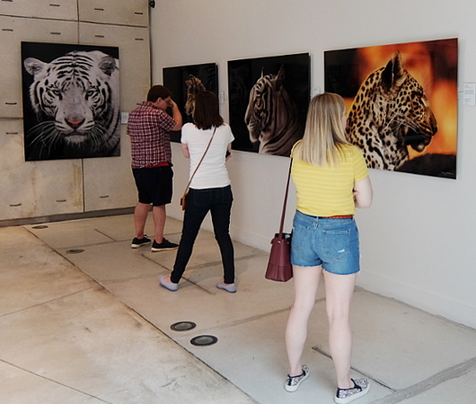 NYのSOHOにあるナショナル・ジオグラフィックのギャラリー National Geographic Fine Art Gallery_b0007805_10523950.jpg