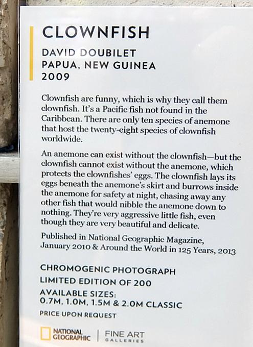 NYのSOHOにあるナショナル・ジオグラフィックのギャラリー National Geographic Fine Art Gallery_b0007805_10545892.jpg