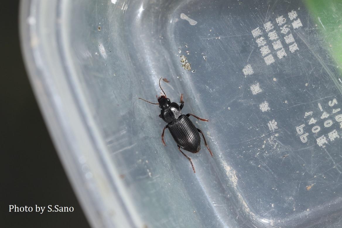 初めての昆虫採集_b0348205_23265138.jpg