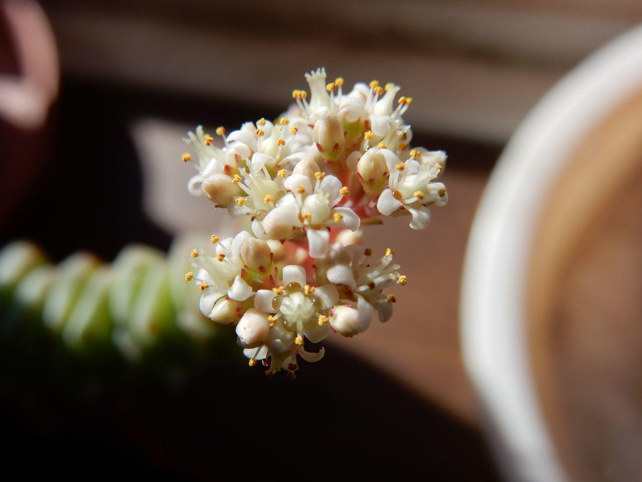 食われながらも咲いていました_c0025115_20555451.jpg