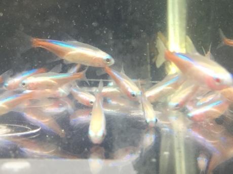 190912 熱帯魚 金魚 めだか 水草_f0189122_12371270.jpeg