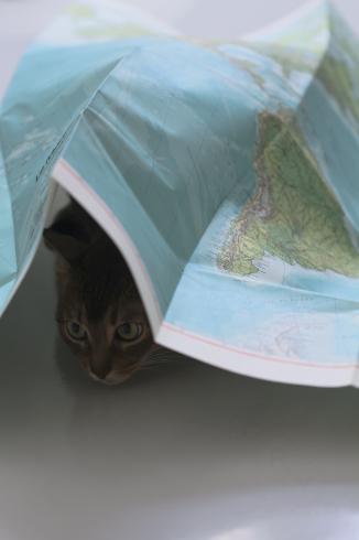 [猫的]地下組織_e0090124_21112037.jpg