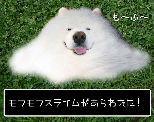 やば暑_c0062832_13414983.jpg