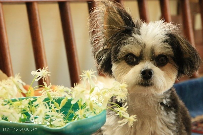 こんな花冠はいかが~~?_c0145250_12052751.jpg