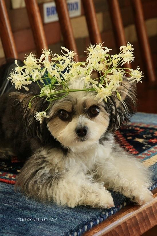 こんな花冠はいかが~~?_c0145250_12053275.jpg