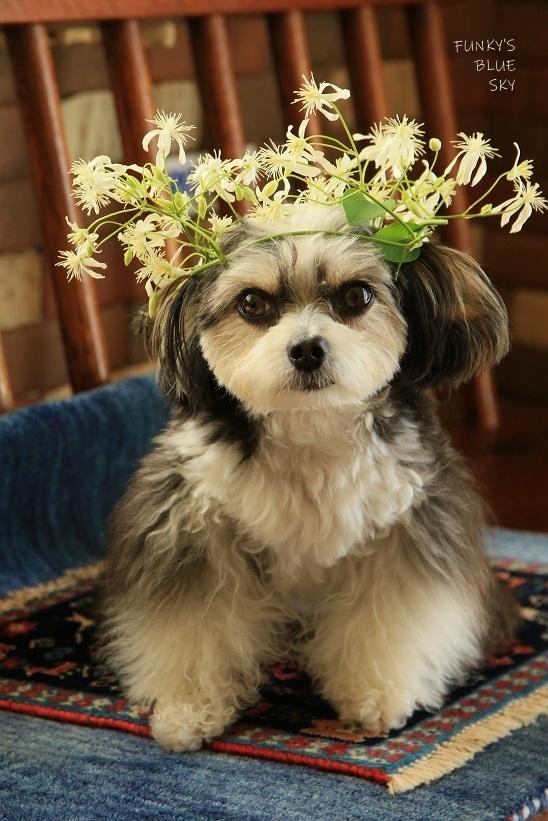 こんな花冠はいかが~~?_c0145250_12053753.jpg