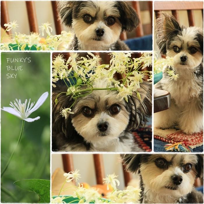 こんな花冠はいかが~~?_c0145250_12054570.jpg