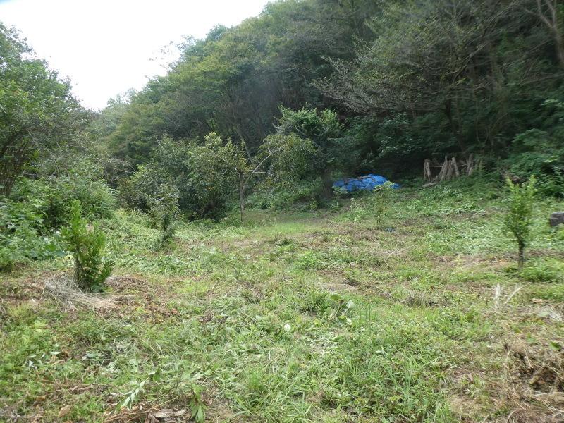 炎天下の草刈りは厳しい・・・孝子の森_c0108460_17295126.jpg