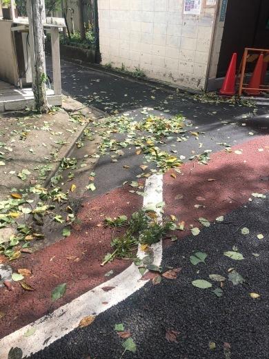 台風一過_c0133561_01212601.jpg