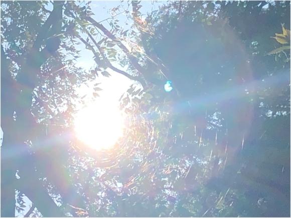 光の輪の循環***_e0290872_23041302.jpg