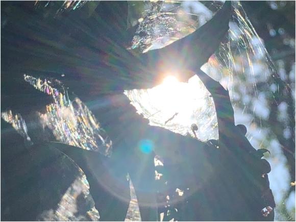 光の輪の循環***_e0290872_23044904.jpg