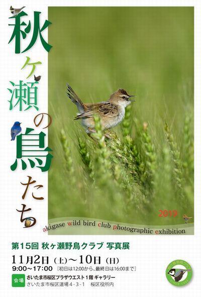 第15回秋ヶ瀬野鳥クラブ写真展→終了しました。_d0020180_18544749.jpg