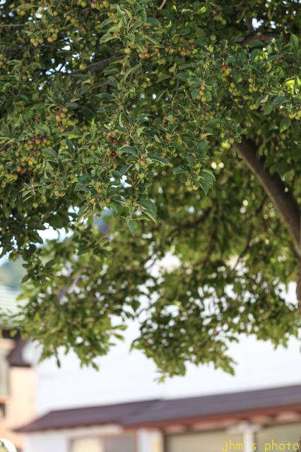 姿見坂と姫リンゴの樹_a0158797_00371889.jpg