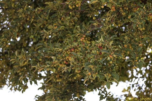 姿見坂と姫リンゴの樹_a0158797_00374307.jpg