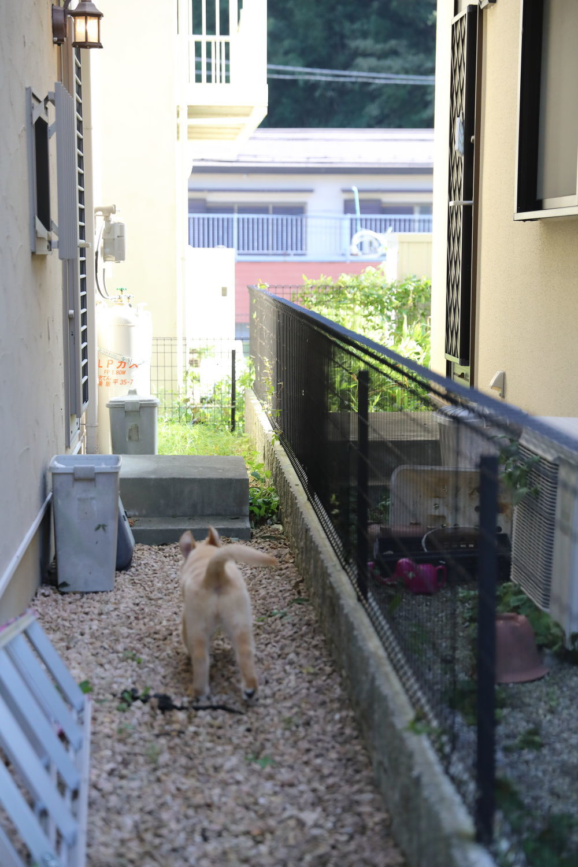 庭が一周できる事♪_b0275998_10150857.jpg