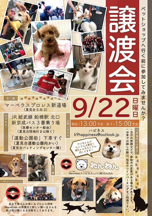来ました、秋田犬♪_f0242002_11470600.jpg