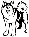 来ました、秋田犬♪_f0242002_13494508.png
