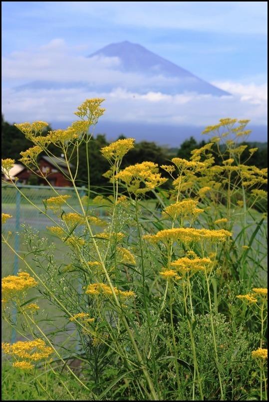 女郎花と富士山_a0188405_20122050.jpg