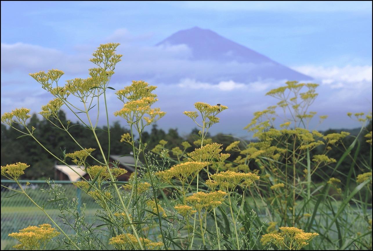 女郎花と富士山_a0188405_20122885.jpg