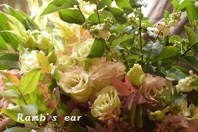 切花の苗も♪_e0128909_11284920.jpg