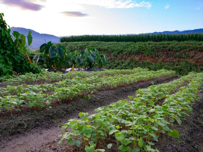 秋野菜の前に思わぬ収穫。_b0340837_15455946.jpg