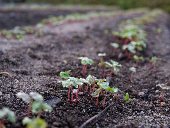 秋野菜の前に思わぬ収穫。_b0340837_15460081.jpg