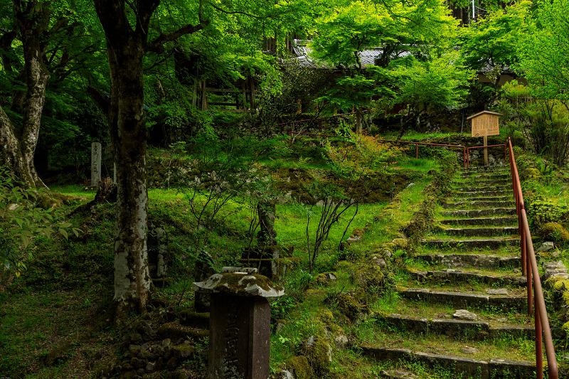 九輪草咲く地蔵院_f0155048_0163082.jpg