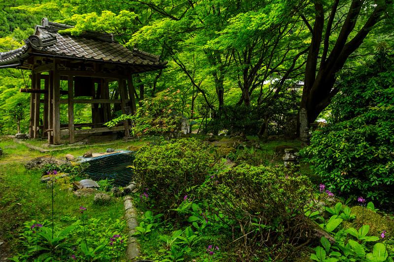 九輪草咲く地蔵院_f0155048_0163882.jpg
