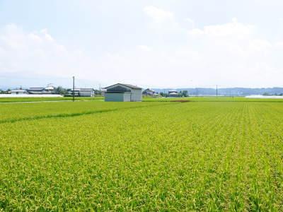 無農薬栽培のひのひかり100%使用の『米粉』おかげさまで売れてます!令和元年度のお米も元気に成長中!_a0254656_17330135.jpg