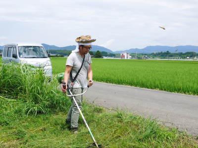 無農薬栽培のひのひかり100%使用の『米粉』おかげさまで売れてます!令和元年度のお米も元気に成長中!_a0254656_17362994.jpg