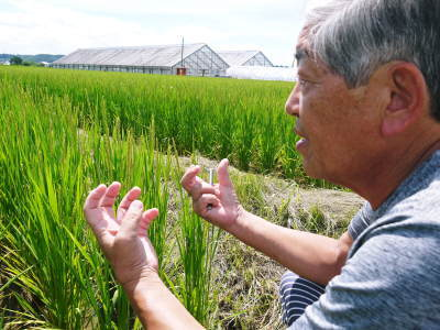無農薬栽培のひのひかり100%使用の『米粉』おかげさまで売れてます!令和元年度のお米も元気に成長中!_a0254656_17535069.jpg