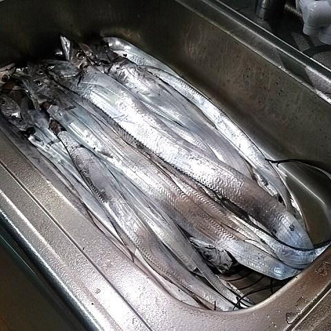日曜日は熊本県玉名漁港よりタチウオ釣りへ出船_a0278866_953969.jpg